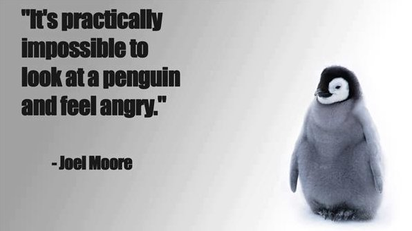 Look at cute penguins, the best therapy