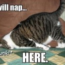 I Will Nap Here…