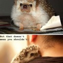 Not Always Easy To Hug a Hedgehog