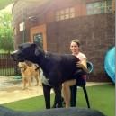 A Dog. A Giant Dog!