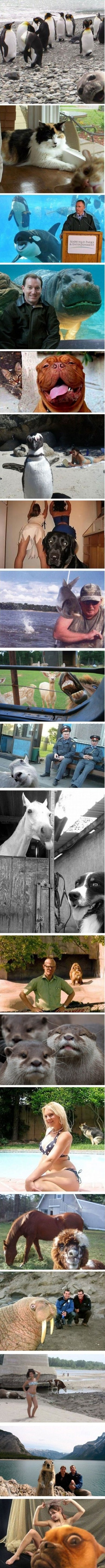 Photobombing Animals