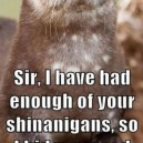 Disgruntled Otter is Disgruntled