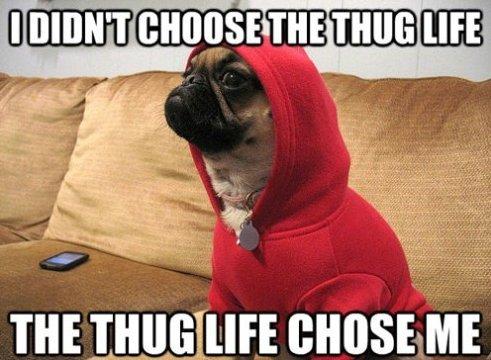 Thug Dog
