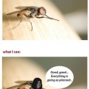 When a Fly Rub It's Hands