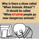When Animals Attack