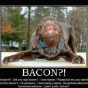 You Got Bacon?!