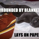 Typical Cats…