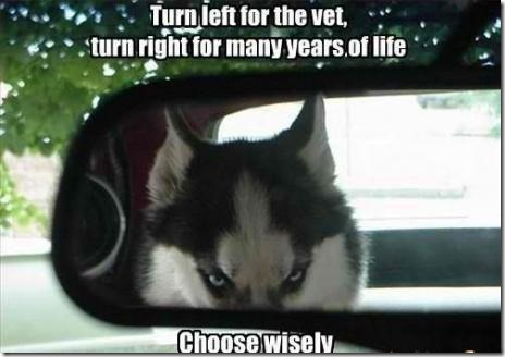 Choose Wisely Human!