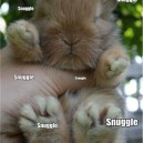 Fuzzy Little Bunny
