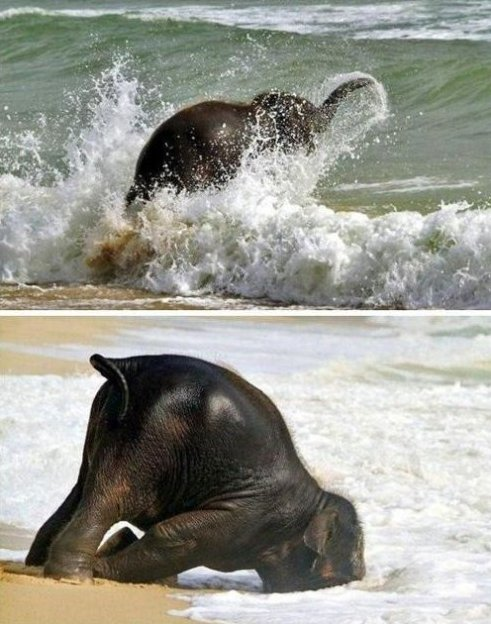 Happiest Baby Elephant Ever