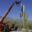 How to hide a cell phone tower in Arizona