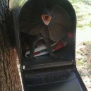 How to scare the mailman