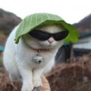 Kitty Keeping it Gangsta