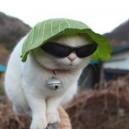 Kitty Keeping it Gangsta