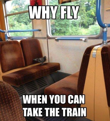 Lazy Urban Pigeon