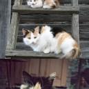 Like Parents Like Kittens