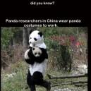 Panda Researchers