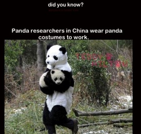 Panda Researchers