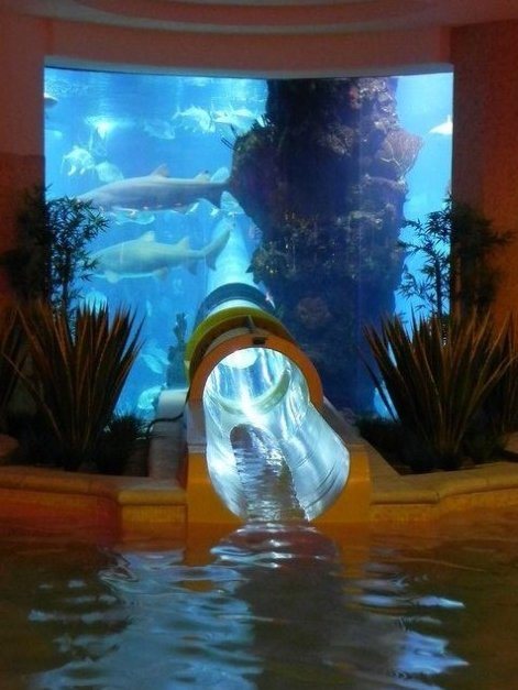 Shark Tank Water Slide