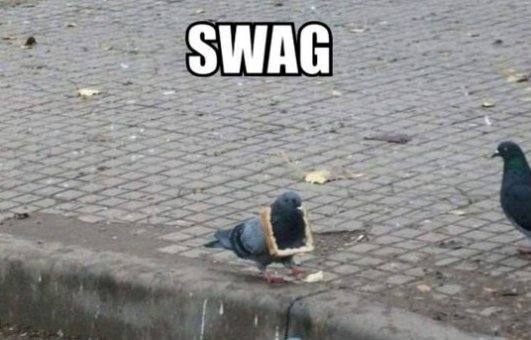Pigeon With Swag