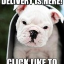 Your Cute Delivery Is Here!