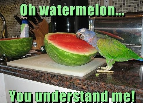 Oh Watermelon…