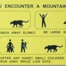 What to do when you encounter a mountain lion