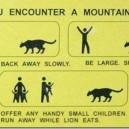 What to do when you encounter a mountain lion