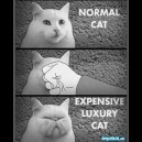 How to Create an Expensive Luxury Cat