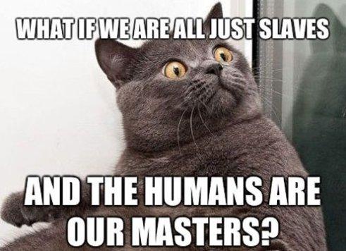 Cat Mind Blown