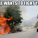 Fire Wants To Fight You