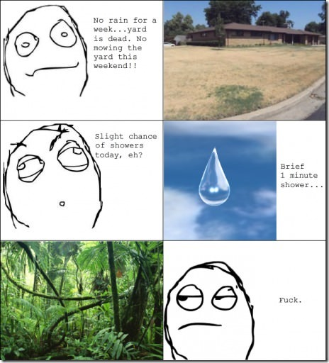 Happens to my yard every summer…