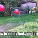How to easily find your turtle