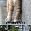 I'm Not Drunk…