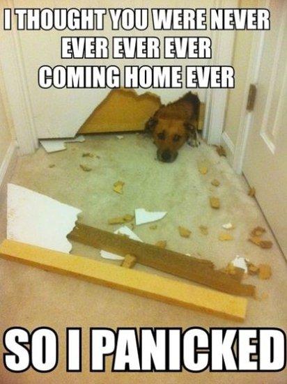 I Panicked!