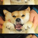 Many Faces of a Cute Dog
