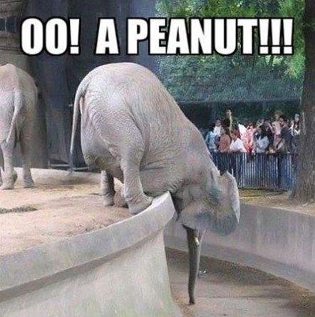 A Peanut!