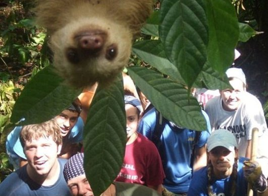 Photobombed by a sloth