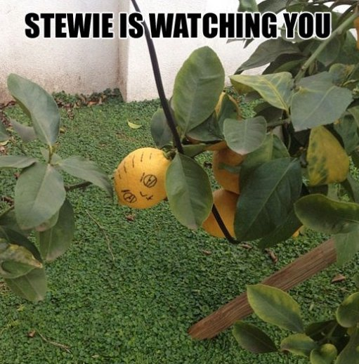Stewie is watching you!