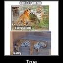 The Zoo – Expectation vs. Reality