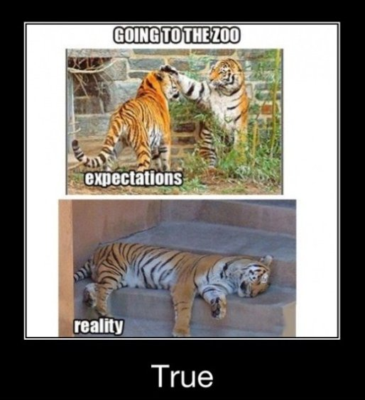 The Zoo – Expectation vs. Reality