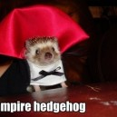 Vampire Hedgehog