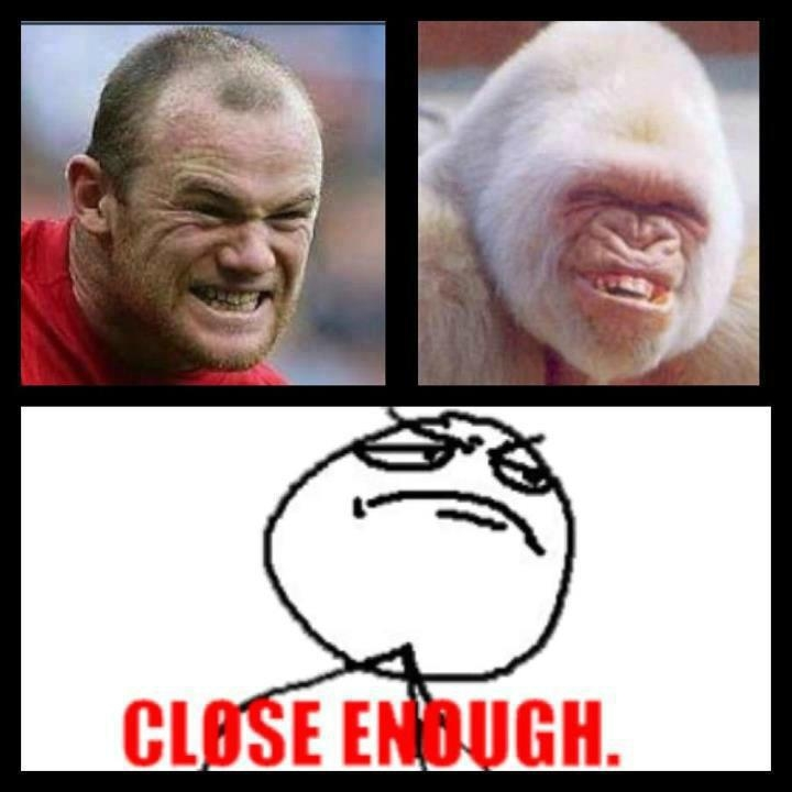 Wayne Rooney Memes Wayne Rooney Totally Looks Like Funlexia Funny Pictures