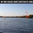 My Dog Chase Boats