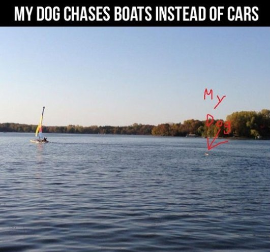 My Dog Chase Boats