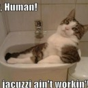 Hey, Human!