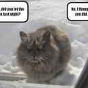 Did you let the cat in?