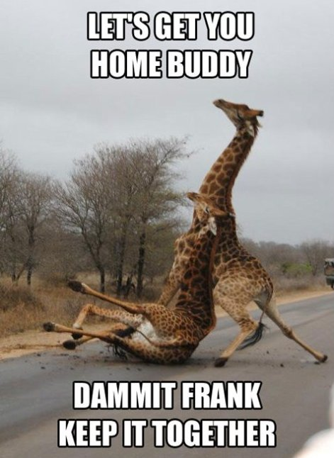 Frank are drunk again…