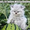 German Cat