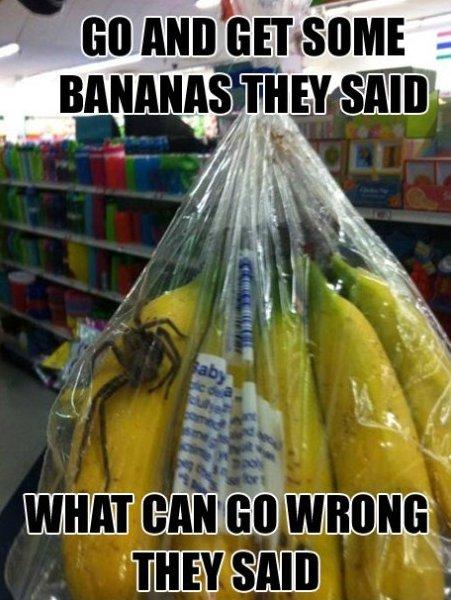 Buy Bananas They Said…